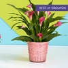 ProPlants – 48% Off Flowering and Potted Plants
