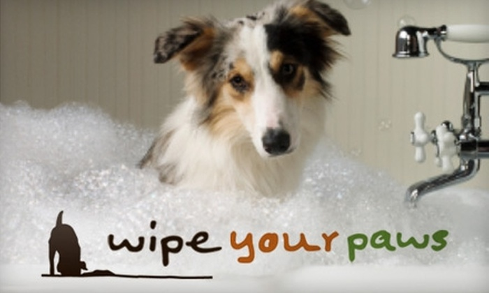 Wipe Your Paws Inc. - Mount Kisco: $25 for $50 Worth of Grooming Services at Wipe Your Paws Inc. in Mount Kisco