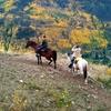 $30 for $60 Toward Horseback Trail Ride in Vail