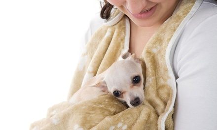 Doggydry Apron Towel for £19.99 (20% Off)