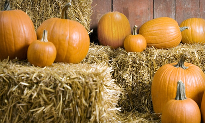 TG Farms Pumpkin Patch - Multiple Locations: $10 for Outing for Two with General Admission and Complimentary Pumpkins at TG Farms Pumpkin Patch ($20 Value)