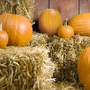 $10 for Outing for Two at TG Farms Pumpkin Patch