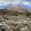30% Off 12-Day Mount Kilimanjaro Expedition