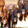 Flip Flop Shops - Multiple Locations: $15 for $30 Worth of Flip-Flops and Sandal Merchandise at Flip Flop Shops