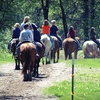 Up to Half Off Horseback Ride for Two