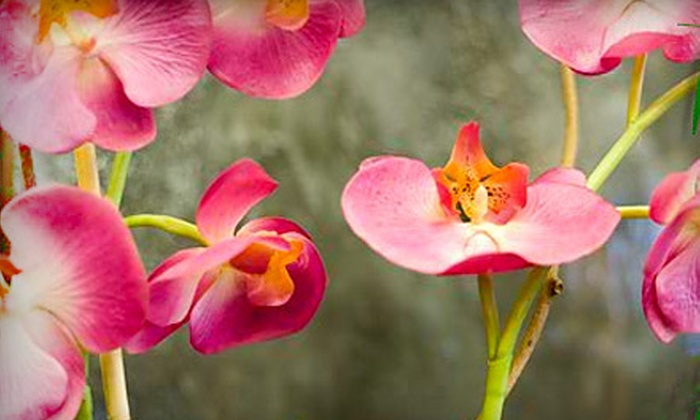 Tropical Designs - Wichita: $10 for a 4-Inch Orchid or 6-Inch Bromeliad from Tropical Designs (Up to a $21.48 Value)