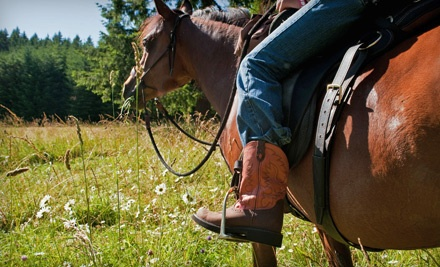 3-Hour Woodland Escape Trail Ride for Two During the Summer Season (a $390 value) - Into The Wild Equine Adventures in Gates