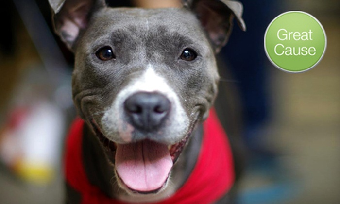Pet Project Rescue - Minneapolis / St Paul: If 48 People Donate $10, Then Pet Project Rescue Can Spay or Neuter Eight Bully-Breed Dogs