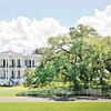 Up to 51% Off Guided Plantation Tour