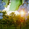 Up to 62% Off Wine Tasting for 2 in Nicholasville