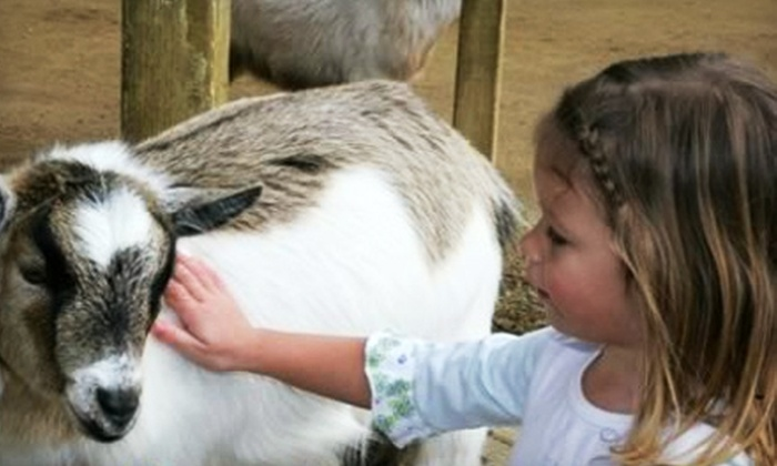 ZOOMARS Petting Zoo - San Juan Capistrano: $18 for Six Passes to ZOOMARS Petting Zoo (Up to $36 Value)