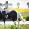 Up to 52% Off at Miami Equestrian Center