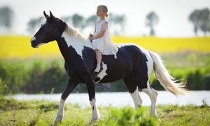 Les écuries du Louis d'or: 2 séances d'1h de cheval ou de poney pour 1 ou 2 personnes dès 18 € chez Les écuries du Louis d'or