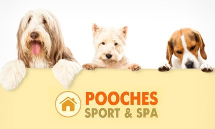 Pooches Sport and Spa - Hunters Point: $16 for One Day of Doggie Daycare at Pooches Sport and Spa