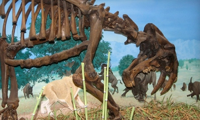 KU Natural History Museum - Lawrence: $20 for a One-Year Family Membership to the KU Natural History Museum (Up to $40 Value)