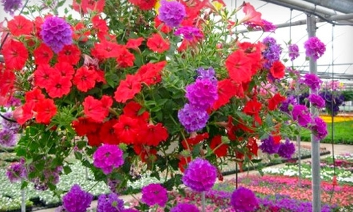 Country View Showplace - Kalamazoo: $10 for $20 Worth of Superbaskets, Flowers, and Plants at Country View Showplace
