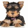 Dog Rhinestone Collar