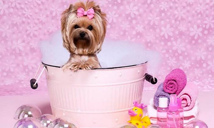 Spa pour animaux animo zen toilettage groupon for Salon toilettage zen attitude
