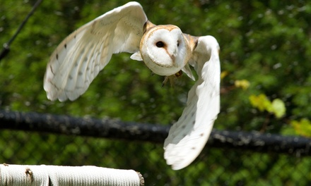 Three-Hour Ultimate Eagle or Owl Experience for One or Two at Birds of Prey Centre (Up to 70% Off)