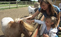 Entry to Boston Park Farm For One Adult and One Child or Two Adults and Two Children (Up to 43% Off)
