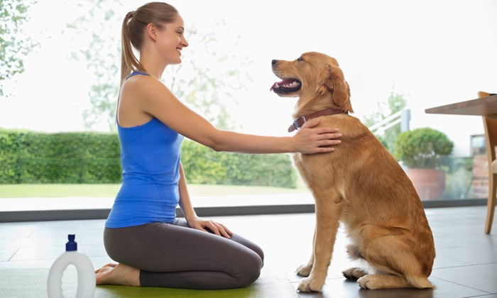 Animal Physical Therapy Course | Groupon Goods