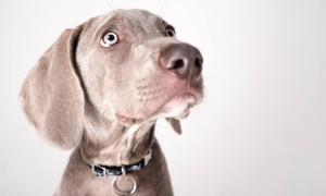 "Flash Photography Studio Ltd: Pet Photoshoot with Two 5"" x 7"" Prints at Flash Photography Studio"