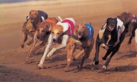 Sunderland Dogs: Entry with Drinks, Pie, Free Bet and Disco for Two or Four