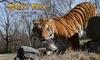Safari Park Pombia, ingressi