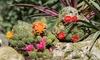 Hardy Garden Cactus Plant