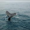 Up to 53% Off Seafari Tour in Oxnard
