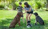 81% Off Dog Commands For Beginners Course from Holly and Hugo