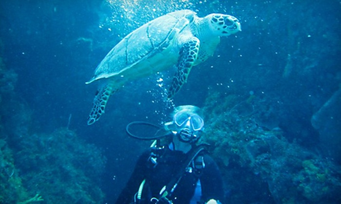 Rena's Scuba School and Travel - Multiple Locations: $50 for a Discover Scuba Diving Class for Two at Rena's Scuba School and Travel ($100 Value)