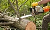 No Limit Tree  Service - Woodbridge: $523 for $950 Worth of Services — No Limit Tree Service