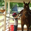 34% Off Summer Camp at Fitzgerald Stables