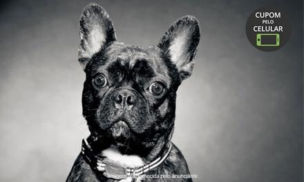Taty Gonini Fotografia – Água Rasa: Ensaio Pet com 30 ou 40 fotos no CD (opção com fotos impressas)