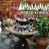 Half Off at White Forest Nursery