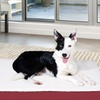 Deluxe Large Orthopedic Pet Bed