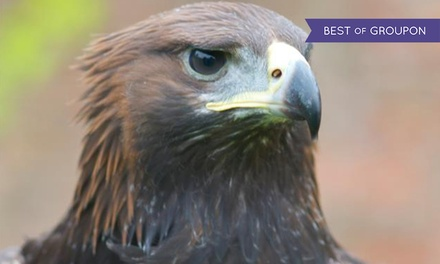 Halk Walk, Half-Day or Full-Day Falconry Experience for Up to Four at York Bird of Prey Centre (Up to 57% Off)