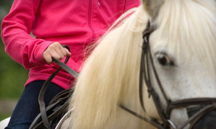 University Equestrian Center - Union Park: Pony Ride or One or Three 30-Minute Private Riding Lessons at University Equestrian Center (Up to 54% Off)