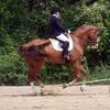 51% Off Horseback-Riding Lesson in Hope