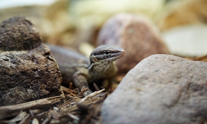Cold Blooded Encounters Science Center  - Troutman: Tour for Up to Five or or $19 for $100 Toward Outreach Programs or Birthdays at Cold Blooded Encounters Science Center