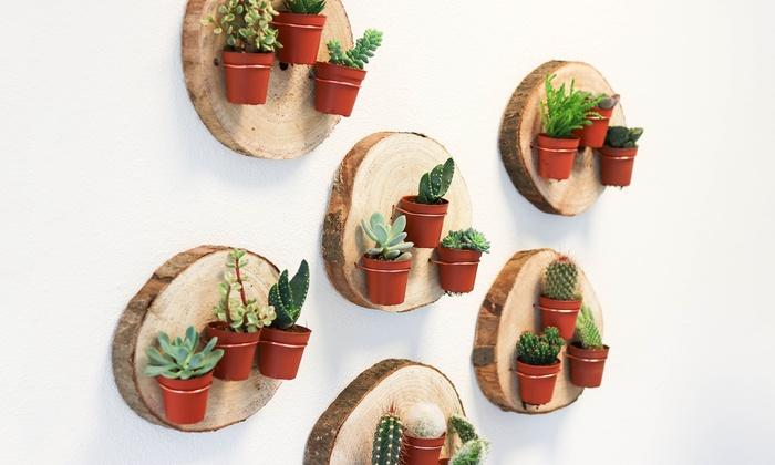 Gereedschap Als Muurdecoratie : Planten muurdecoratie groupon goods