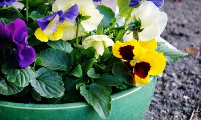Sunnyside Gardens - Linden Hills: $10 for $20 Worth of Plants and Gardening Accessories at Sunnyside Gardens