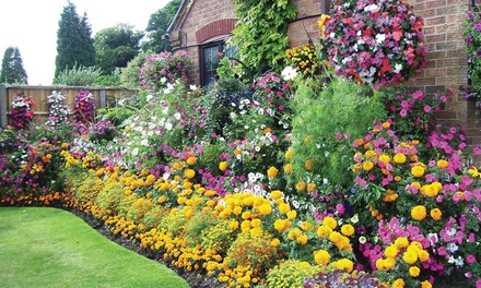 Lucky Dip Summer Bedding Plant Collection - Up to 72 Plants