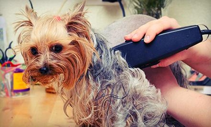 The Dog Spaw - Southeast Arlington: Grooming Services from The Dog Spaw (50% Off)