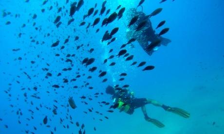 Bautismo de buceo o curso PADI Scuba Diver para 1 persona desde29,95 € enScubazul Oferta en Groupon