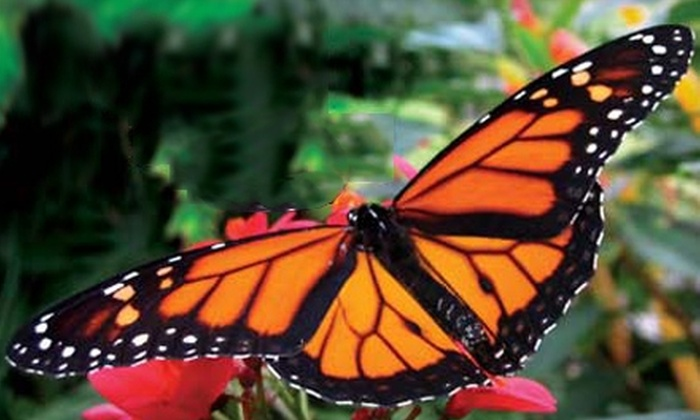 Franklin Park Conservatory - Columbus: $11 for Two Adult Admissions to the Franklin Park Conservatory in Columbus