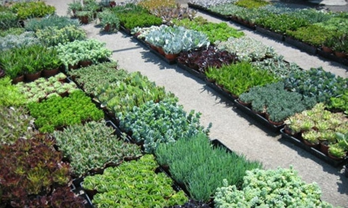 Living Green Nursery & Garden Center  - Mid Central: $75 for an In-Home Landscaping Consultation from Living Green Nursery & Garden Center ($150 Value)