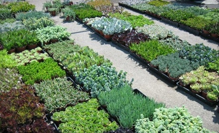 Living Green Nursery & Garden Center: One-Hour In-Home Landscaping Consultation - Living Green Nursery & Garden Center  in