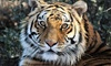 Up to 31% Off Admission to Heritage Park Zoological Sanctuary